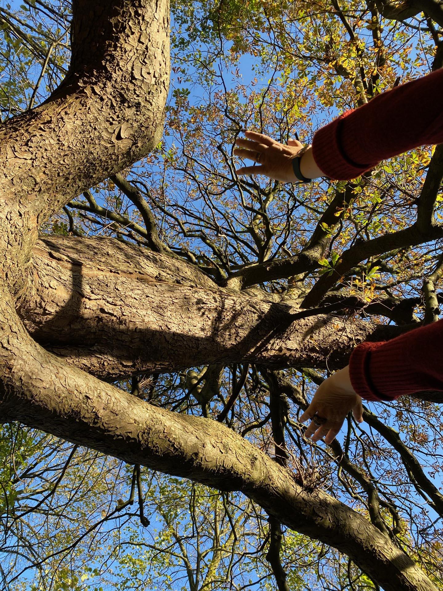 Connectie met natuur - boom - Reiki Westland